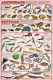 Amphibian and Reptile Orders