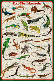 Exotic Lizards